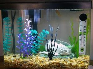 Контроль температуры в аквариуме