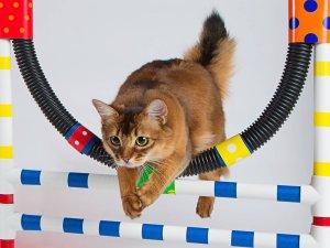 Проведение тестов для выяснения интеллекта кошек