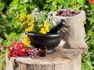 Растительные компоненты в составе Стоп Цистит био