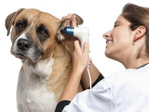 Профилактика ушных заболеваний