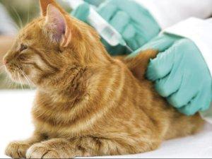 Проведение вакцинации перед операцией