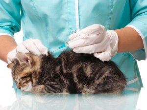 Обязательное прохождение вакцинации перед операцией