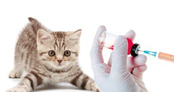 Необходимость вакцинации котят