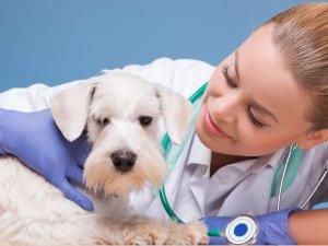 Консультация ветеринара о дозировке препарата