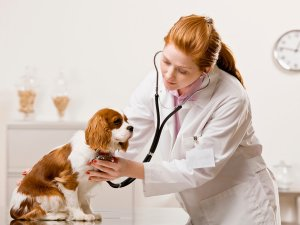 Проведение дегельминтизации под контролем ветеринара