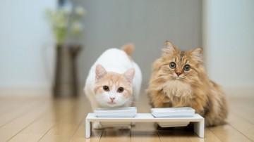 Выбор корма для кошек