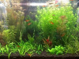 Вместительный аквариум для рыбок данио