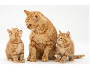 Питание кошки согласно возрасту