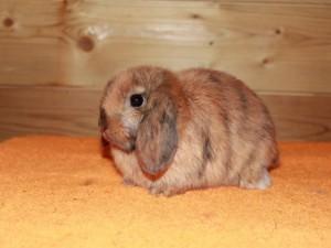 Изолирование больного кролика
