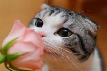 Реакция кошек на запахи