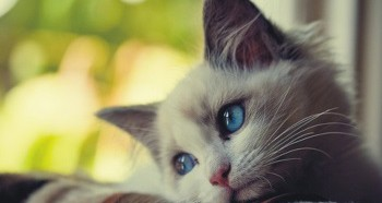 Проблема запора у котенка