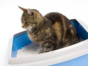 Применение вазелинового масла при запорах у кошек