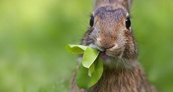 Выбор травы для кроликов