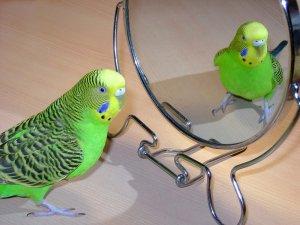 Размещение зеркала в клетке