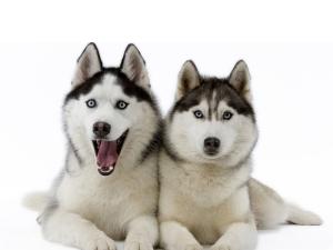 Выбор клички в зависимости от характера собаки