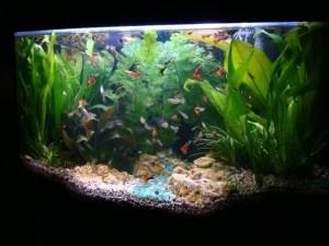 Пример аквариума для гуппи
