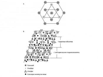 Гидроксеапатит