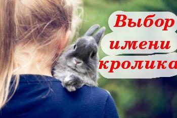 Выбор имени для кролика