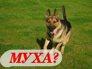 Муха - отличная кличка для быстрых и активных собак