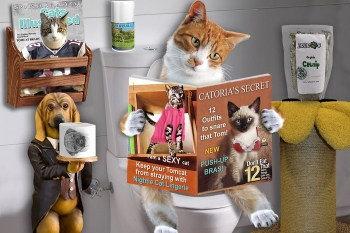 Проблема кошачьего запора