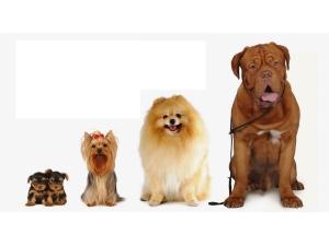 Выбор клички в зависимости от размера собаки