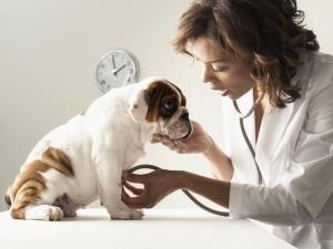 Консультация ветеринара перед применением препарата